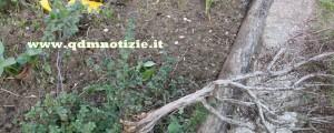 I cartellini gialli di plastica, sui quali erano apposte le specifiche di riconoscimento, anche loro spezzati e sparpagliati nel giardino circostante