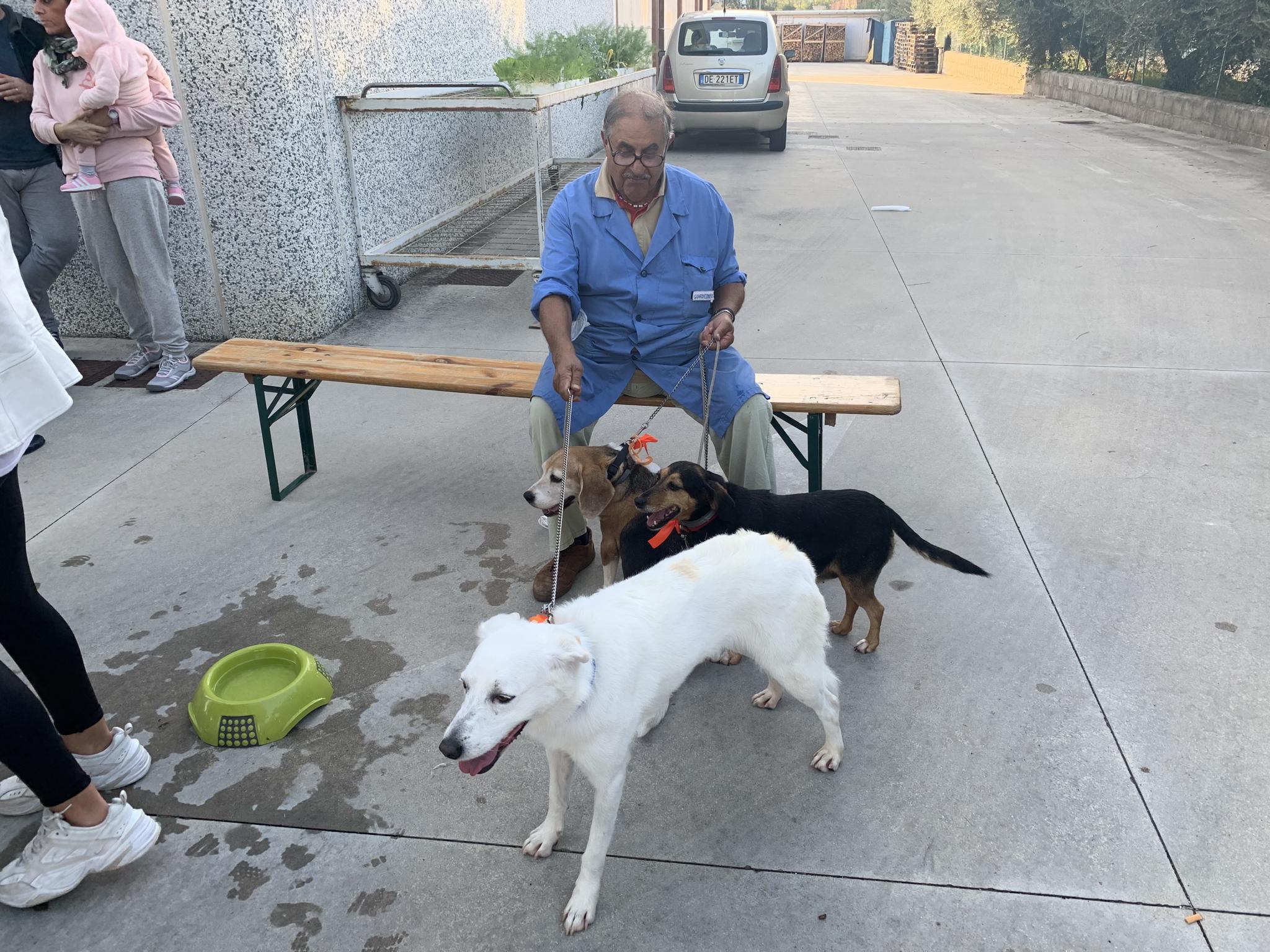 Sacchettoni Alfredo cani provenienti dal canile di jesi
