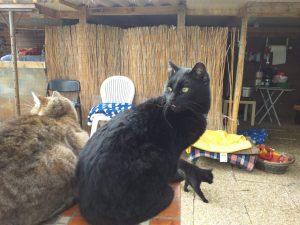 Antonietta gatti Jesi